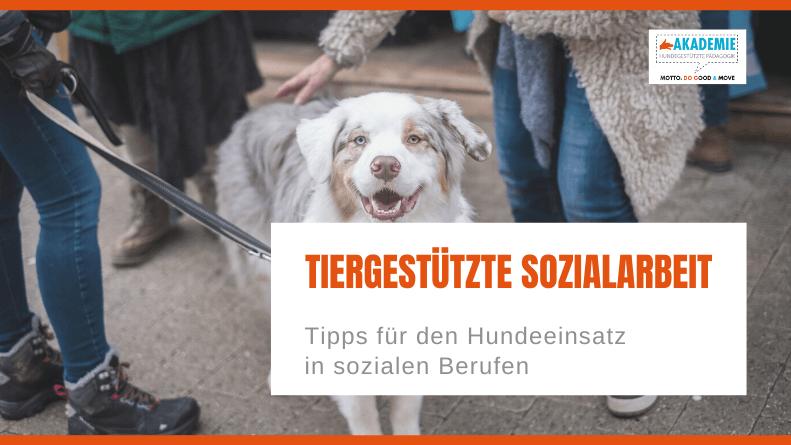 Tiergestützte Sozialarbeit: Tipps für den Hundeeinsatz in sozialen Berufen